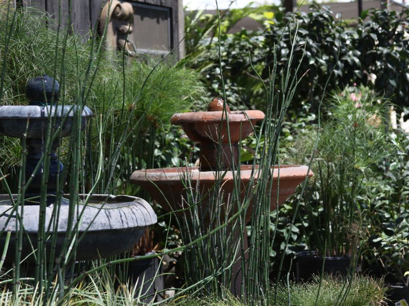 Hunter's Nursery in San Diego at Lemon Grove carries the best variety of fountains