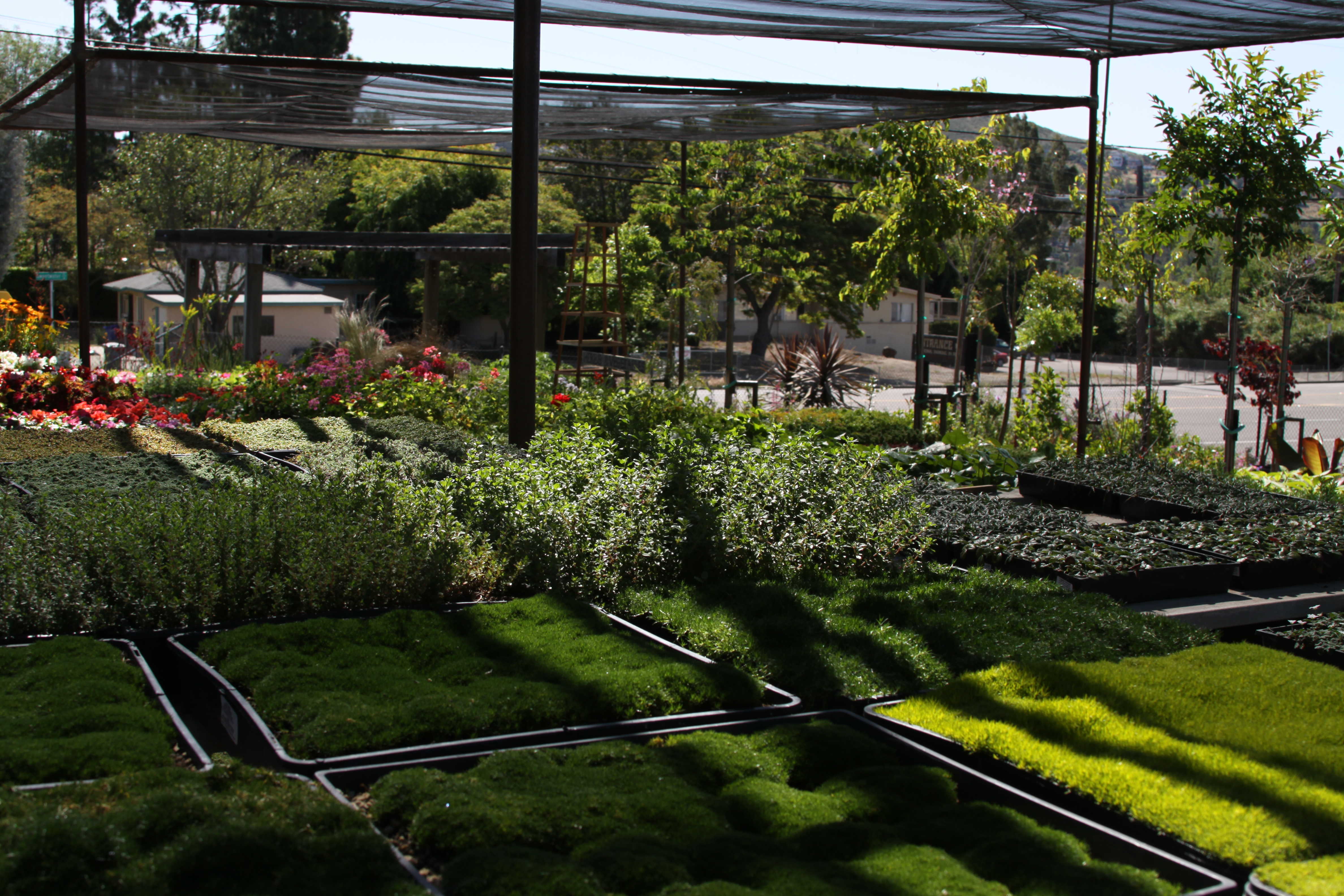 Hunter's Nursery in San Diego for for garden and landscape