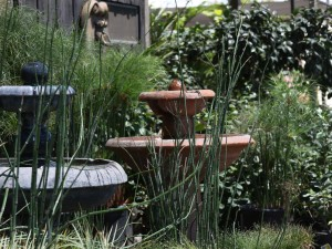Attract birds to your garden and enjoy the sound of water