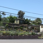 Hunter's Nursery in Lemon Grove easy access from all areas of San Diego