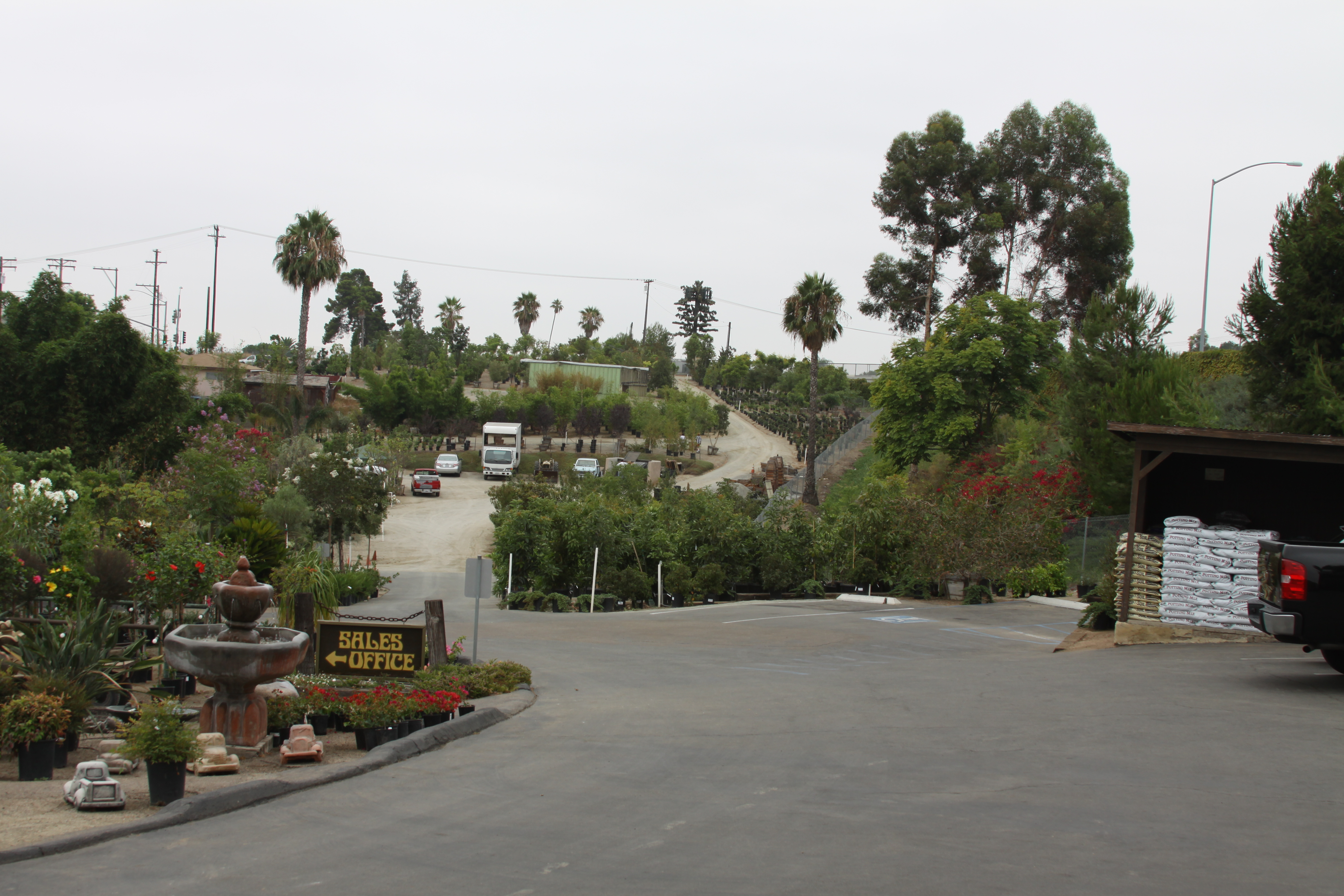 Hunter's Nursery carries fruit trees, citrus trees, avocado trees, and landscape trees for the San Diego climate.