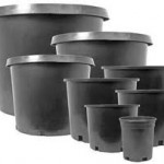 Bareroot roses will arrive next month and we are in need of #5 nursery containers at Hunter
